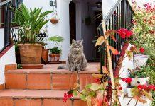 Comment bien nettoyer votre terrasse ?