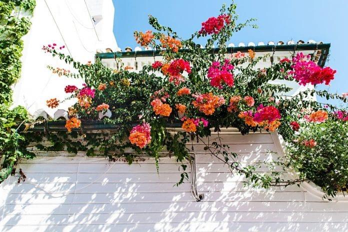 Quelles plantes choisir pour ma terrasse?