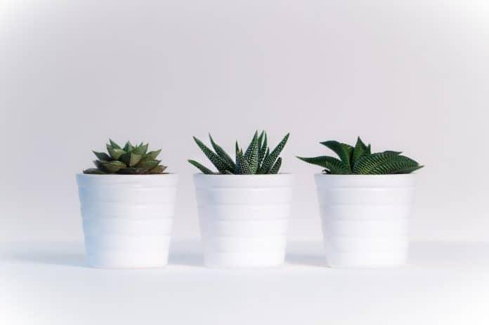 Quelles plantes d'intérieur choisir quand on a peu de lumière?