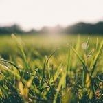 3 engrais naturels pour vos plantes